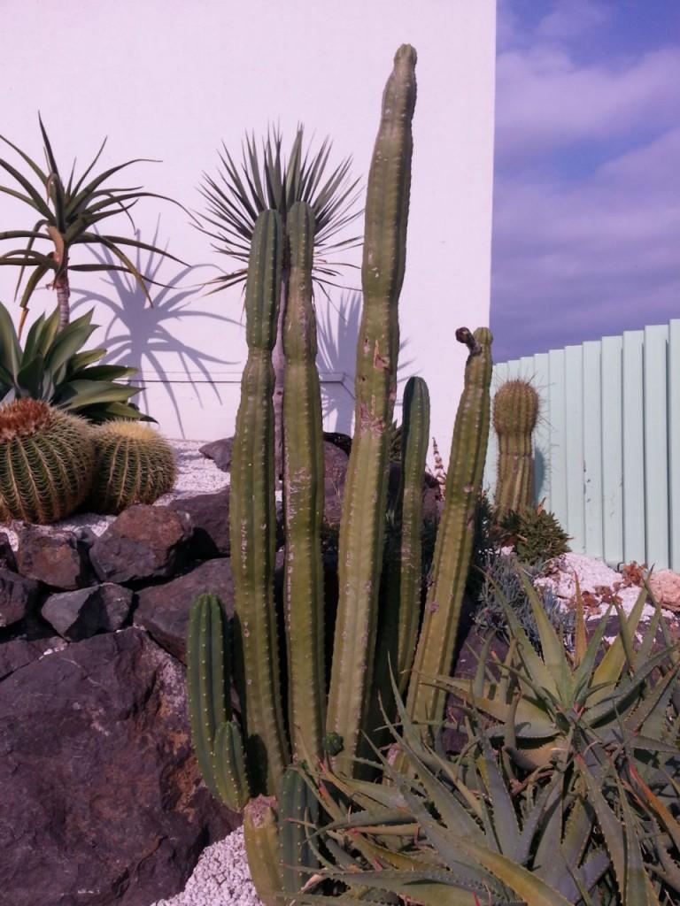 Les cactus résistent bien au froid dans le sud-est de la France