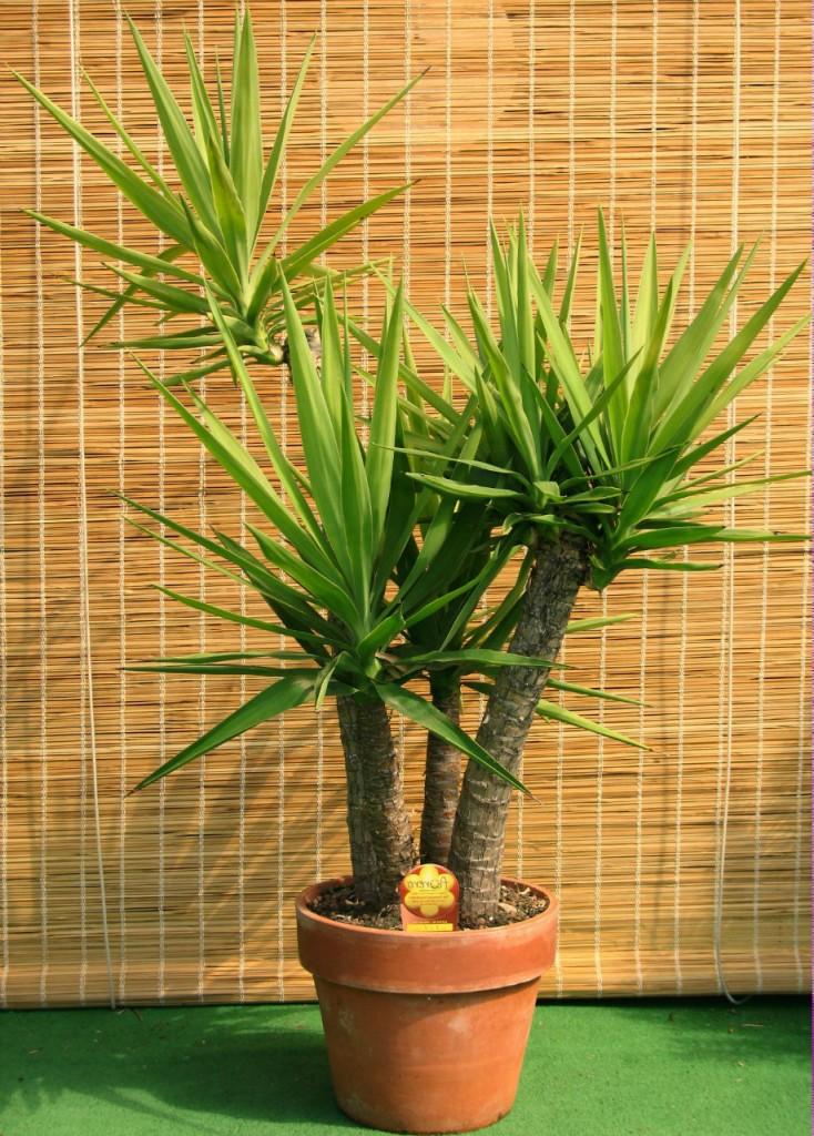Plantes luxuriantes : mode d'emploi